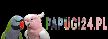 Papugi24.pl